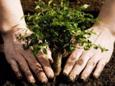 Высадка деревьев, На двух улицах Симферополя посадят молодые деревья