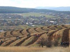 Высадка деревьев, Крымский премьер посадил клены в Симферопольском районе