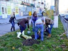 Высадка деревьев, Две улицы Симферополя озеленили платанами