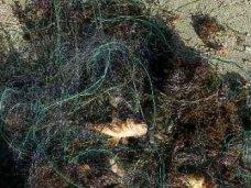 Браконьерство, Браконьер, Браконьер в Орджоникидзе сетью ловил кефаль и ершей