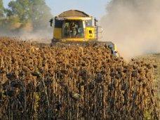 Крым стал лидером по росту урожая подсолнечника и картофеля