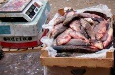 стихийная торговля, У стихийных торговцев в Крыму изъяли 42 кг рыбы