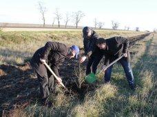 Высадка деревьев, Вдоль трассы в Симферопольском районе высадили деревья