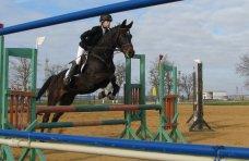 Конный спорт, Кубок премьера Крыма по конному спорту заполучила 16-летняя девушка