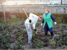 Благоустройство, На набережной Феодосии посадят 2543 кустов роз
