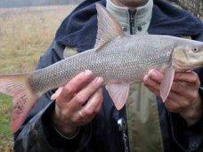 Браконьерство, Браконьер ловил в Крыму краснокнижную рыбу