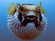 Алуштинский аквариум, В аквариум Севастополя привезли экзотических рыб