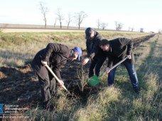 Высадка деревьев, За неделю экологической акции в Крыму высажено 4,5 тыс. деревьев