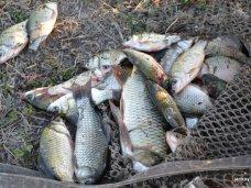 Браконьерство, Браконьер наловил в Северо-Крымском канале рыбы на 10 тыс. грн.