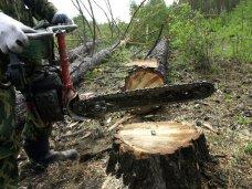 Вырубка деревьев, На востоке Крыма незаконно вырубили 200 деревьев