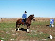 Конный спорт, В Феодосии будут развивать конный спорт