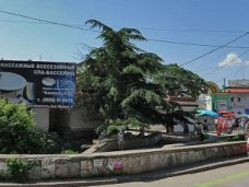 Вырубка деревьев, Прокуратура установит виновных в уничтожении ливанского кедра в Симферополе
