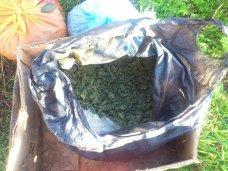 Наркотики, В Крыму пенсионерка хранила дома коноплю