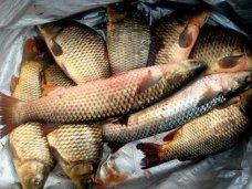 Браконьерство, В Крыму задержали браконьера с уловом на 30 тыс. грн.