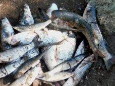 Браконьерство, На озере в Сакском районе браконьер наловил рыбы на 55 тыс. грн.