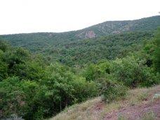 Лес, В Крыму лесами покрыто почти 12% территории