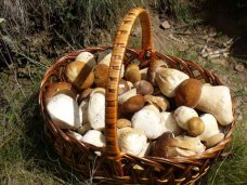 Леса, В Крыму установят норму для грибников и собирателей ягод