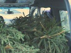 Елки, В Белогорске лесники задержали автомобиль с елками