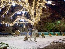 Новый год, «ДТЭК Крымэнерго» устроило иллюминацию в парке Симферополя