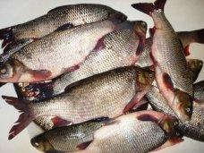 Подпольный цех, В Нижнегорском районе закрыли незаконно работающий рыбный цех