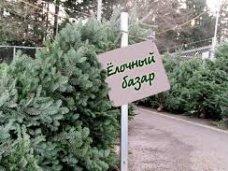 Елочный базар, В Крыму будут работать 215 елочных базаров