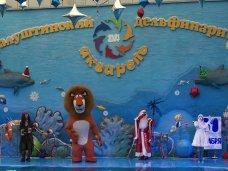 Дельфинарий, В Алуште поставили спектакль-мюзикл в дельфинарии
