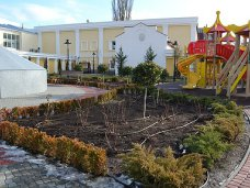 сквер Республики, В сквере Симферополя сломали очередной кедр