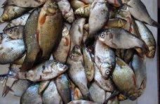 Браконьерство, В Крыму браконьеры наловили карасей более чем на 2 тыс. грн.