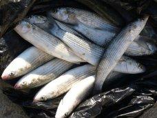 Браконьерство, На реке в Керчи поймали двух браконьеров