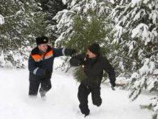 Елочный базар, За незаконную вырубку елок в Крыму задержали 19 человек