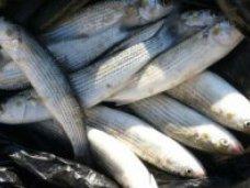 Браконьерство, На озере Сасык-Сиваш поймали браконьера с 17 кг рыбы