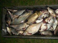 Браконьерство, В Красноперекопске браконьер наловил рыбы на 7 тыс. грн.