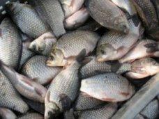 Браконьерство, На Азово-рисовом канале задержали браконьера с карасями