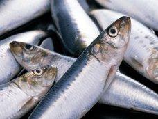Браконьерство, В Феодосии поймали браконьера с сетью
