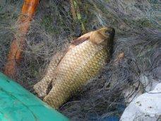 Браконьерство, На озере Кизил-Яр попался браконьер с карасями и белым амуром