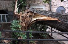 Происшествие, В Джанкое упавшее дерево повредило газопровод и линии электропередач