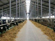 Мясо-молочные предприятия Крыма уплатили за год 9,6 млн. грн. НДС