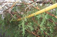 Происшествие, В Джанкойском районе упавшие деревья повредили газопровод в нескольких местах