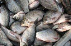 Браконьерство, В Крыму поймали браконьера с уловом карасей на 64 тыс. грн.