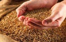 В Крыму в прошлом году собрали 764,8 тыс. тонн зерновых культур