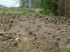 Коррупция, Лесничий в Крыму за 3 тыс. грн. выдал разрешение на незаконную вырубку леса