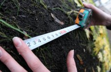 Земля, Сельсовет незаконно выделил под строительство 7 га леса под Алуштой