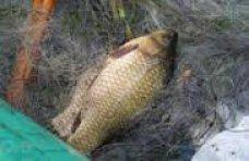 Браконьерство, В Сакском районе задержан браконьер с карасями и кефалью