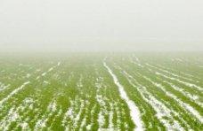 В Крыму более 430 тыс. га засеяли озимыми зерновыми