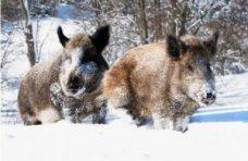 Дикие животные, В угодьях Севастополя подсчитали диких животных