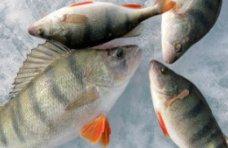 Рыба, В Крыму провели акцию «Кислород» для предотвращения заморов рыбы