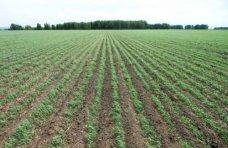 зерновые, В Крыму засеют яровыми культурами 173 тыс. га