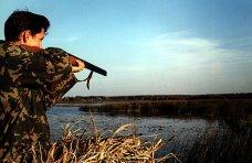 В Крыму охотники по ошибке отстреливают редких птиц, – орнитологи