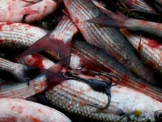 В Алуште поймали браконьера с уловом кефали