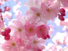 В Симферополе состоится Фестиваль дружбы, весны и надежды